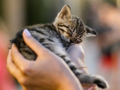 How to bring a pet to Turkey?
